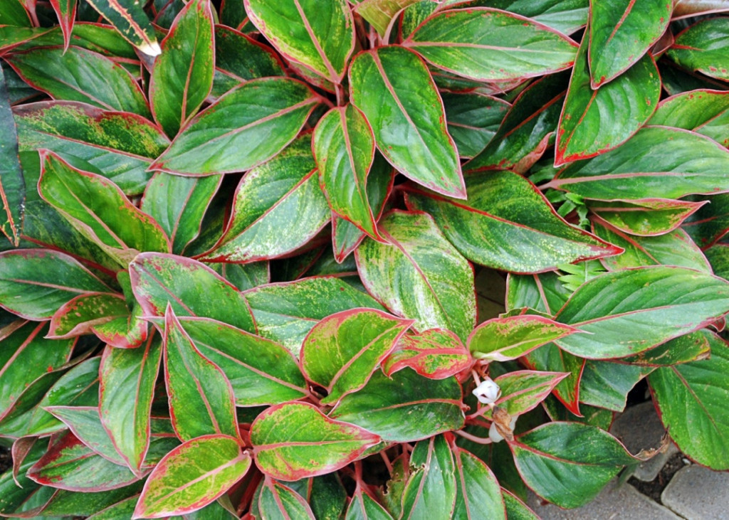 Try some low light, low-maintenance houseplants